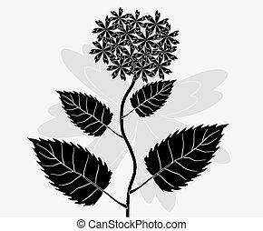 vetorial, padrão, flor branca, fundo