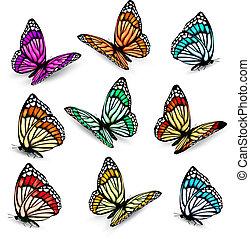 vetorial, realístico, jogo, coloridos, butterflies.