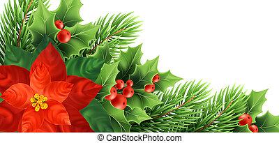 vetorial, realístico, natal, ilustração, poinsettia, flor