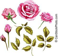 vetorial, realístico, rosa, flor, folhas, caule, jogo