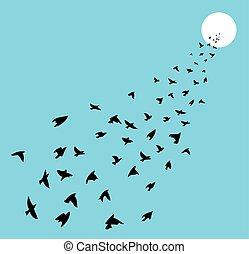 vetorial, rebanho, de, muitos, pássaros voando, direção, sol