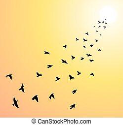 vetorial, rebanho, de, voando, pássaros, direção, sol brilhante