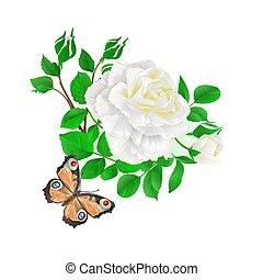 vetorial, rosa, borboleta, brotos, flover, branca, vindima