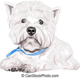 vetorial, sério, cão, highland terrier branco ocidental,...