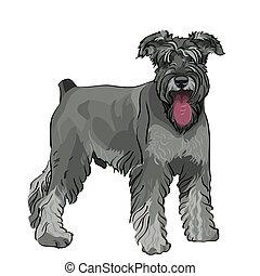 vetorial, schnauzer miniatura, cão, com, seu, língua,...