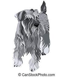 vetorial, schnauzer miniatura, cão