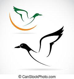 vetorial, selvagem, imagem, voando, pato