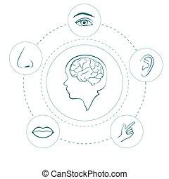vetorial, sentidos, cinco, ícones