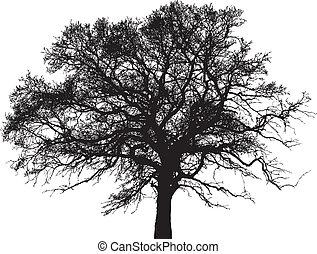 vetorial, silhueta árvore