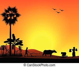 vetorial, silueta, arado, paddy, agricultor, desenho, campo