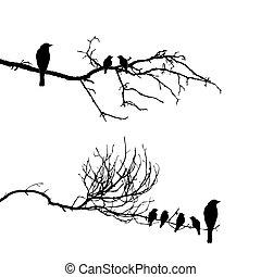 vetorial, silueta, de, a, pássaros, ligado, ramo