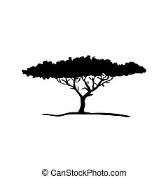 vetorial, silueta, de, acácia, árvore., africano, flora