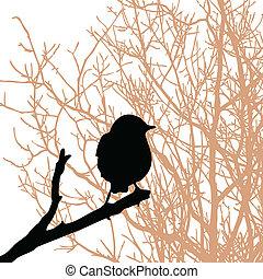 vetorial, silueta, pássaro, ramo