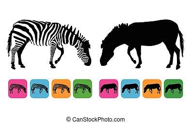 vetorial, silueta, zebra