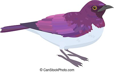 vetorial, starling, ametista, ilustração