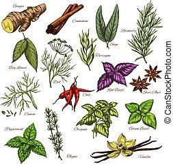 vetorial, temperos, e, ervas, esboço, ícones, de, temperos