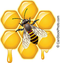 vetorial, trabalhando, abelha, ligado, honeycells