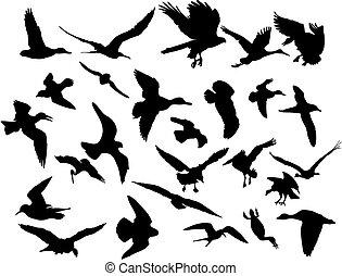vetorial, voando, pássaros