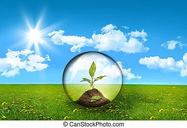vetro, sfera, con, pianta, in, uno, campo, di, erba alta