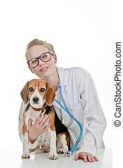 vets chirurgie, mit, haustier, hund