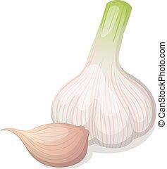 vettore, aglio, isolato, illustrazione, white.
