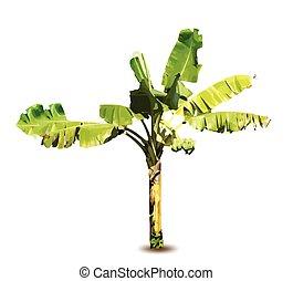 vettore, albero, banana, illustrazione