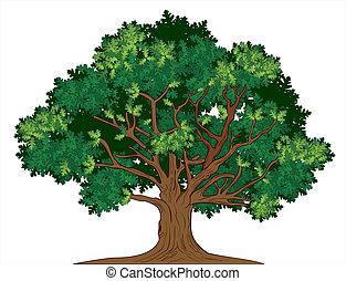 vettore, albero quercia