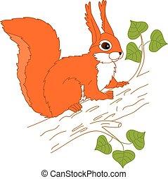 vettore, albero, scoiattolo, seduta