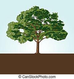 vettore, albero