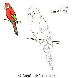 vettore, animale, disegnare, pappagallo, educativo, gioco