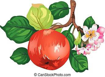 vettore, apple-tree, ramo