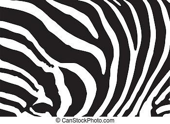 vettore, astratto, pelle, struttura, di, stampa zebra, modello
