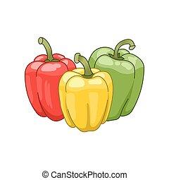 vettore, botanico, colorato, illustrazione, paprica