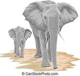 vettore, calf., elefante