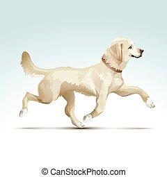 vettore, cane, cane da riporto, labrador