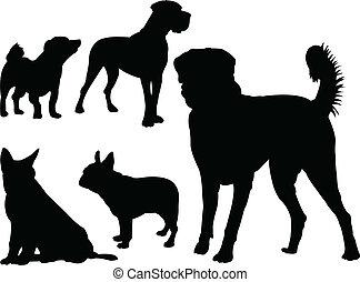 vettore, -, cane, collezione