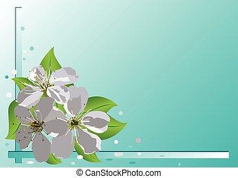 vettore, ciliegia, fiori, scheda