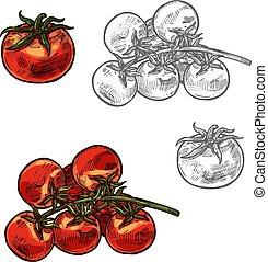 vettore, ciliegia, verdura, icona, schizzo, pomodori
