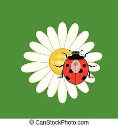vettore, coccinella, fiore, rosso, camomile