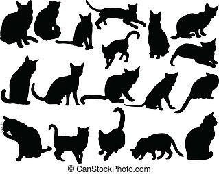 vettore, -, collezione, gatto