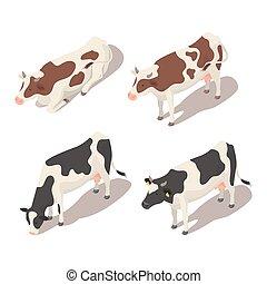 vettore, cows., isometrico, set, 3d
