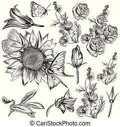 vettore, disegnato, set, flowers.eps, mano