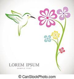 vettore, disegno, fondo, fiori bianchi, colibrì