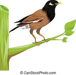 vettore, disegno, uccello, ramo