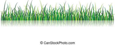 vettore, erba, illustrazione