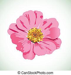 vettore, fiore, fiore, delicato