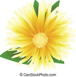 vettore, fiore, illustrazione