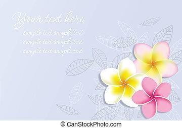vettore, fiori, plumeria, fondo