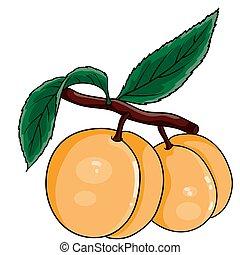 vettore, foglie, fondo, illustrazione, oggetto, verde, appendere, bianco, due, ramo, albicocche, isolato