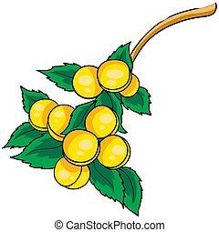 vettore, foglie, fondo, illustrazione, oggetto, verde, appendere, bianco, molti, ramo, cotogne, isolato